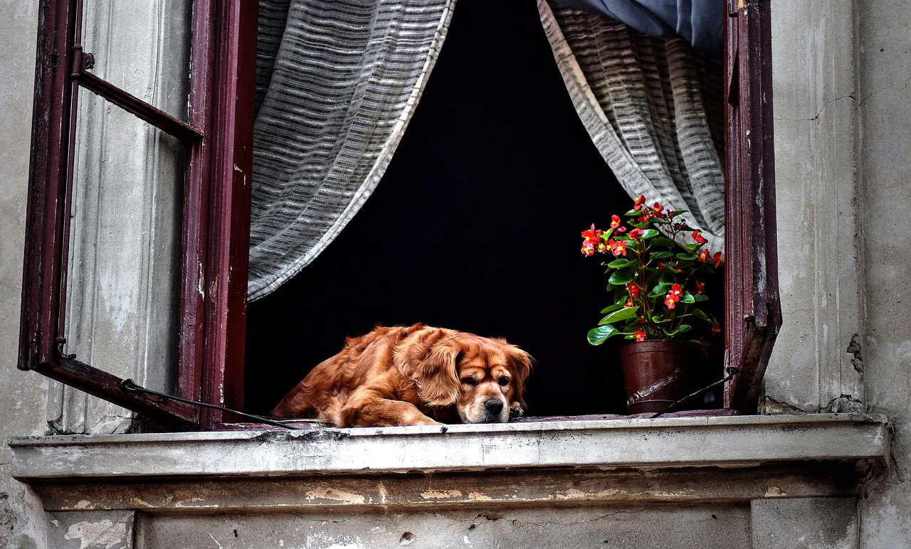 Dog ventilation